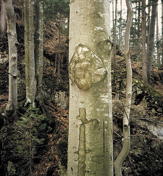 Druhy stromov